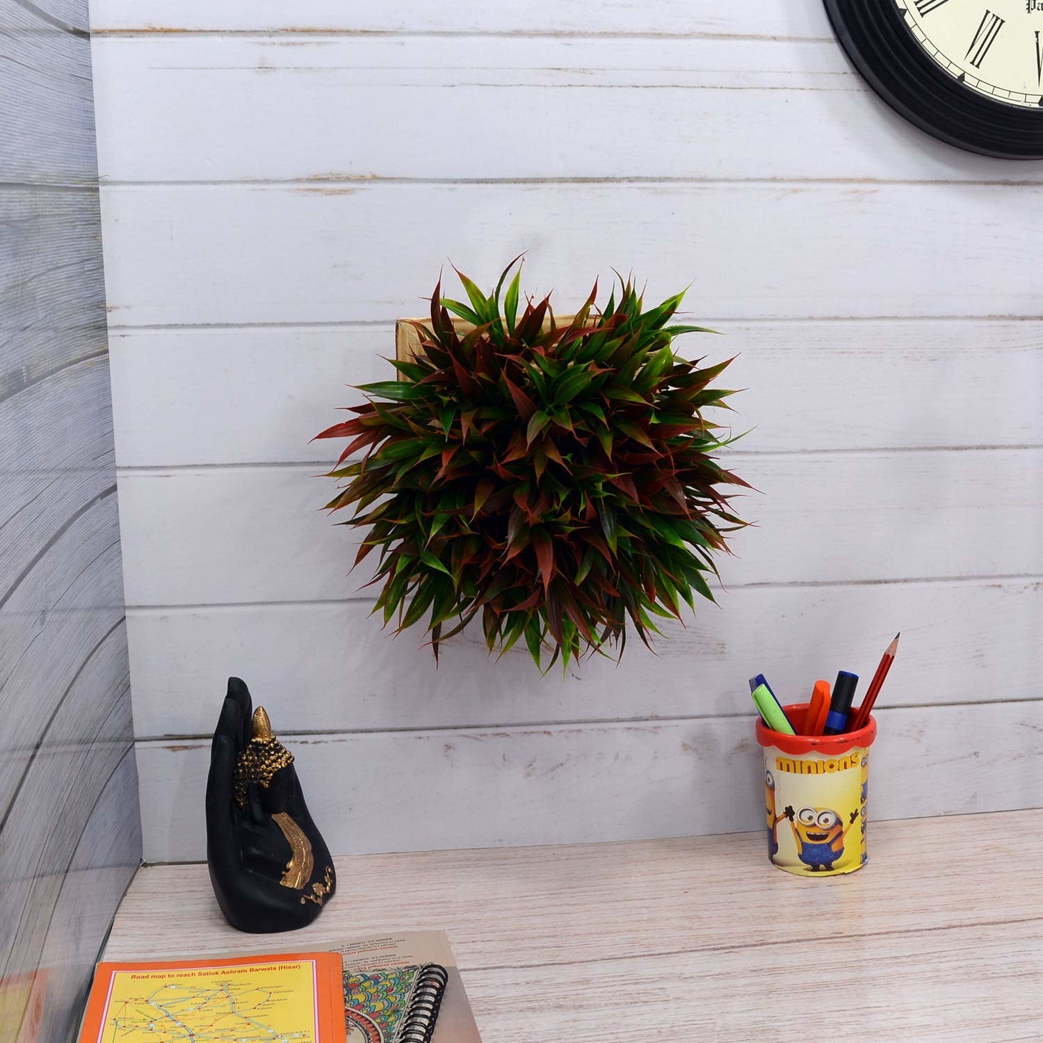 Plant attached from its bottom to the wall in front of a desk.