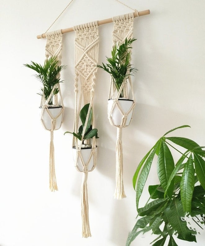 three plants hanging in a macrame wall hanging