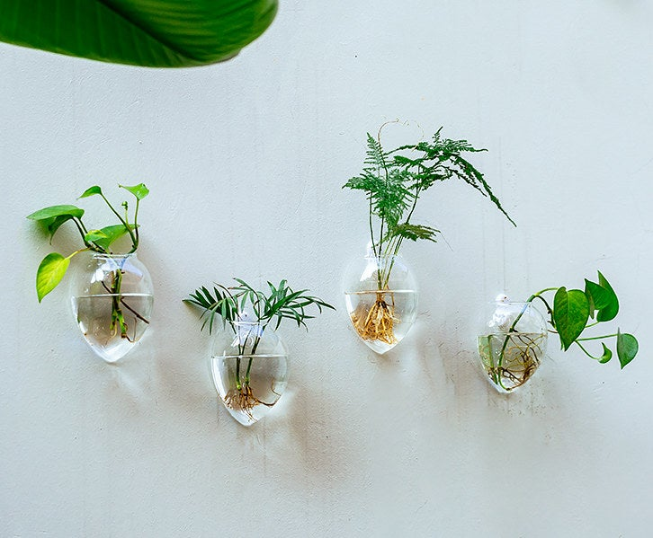 four vases with plants and water in each, mounted on a wall