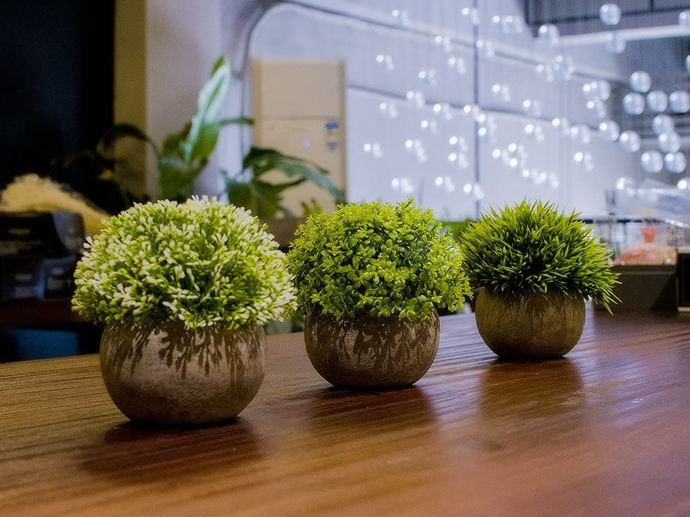 Three fake plants in a row on a table