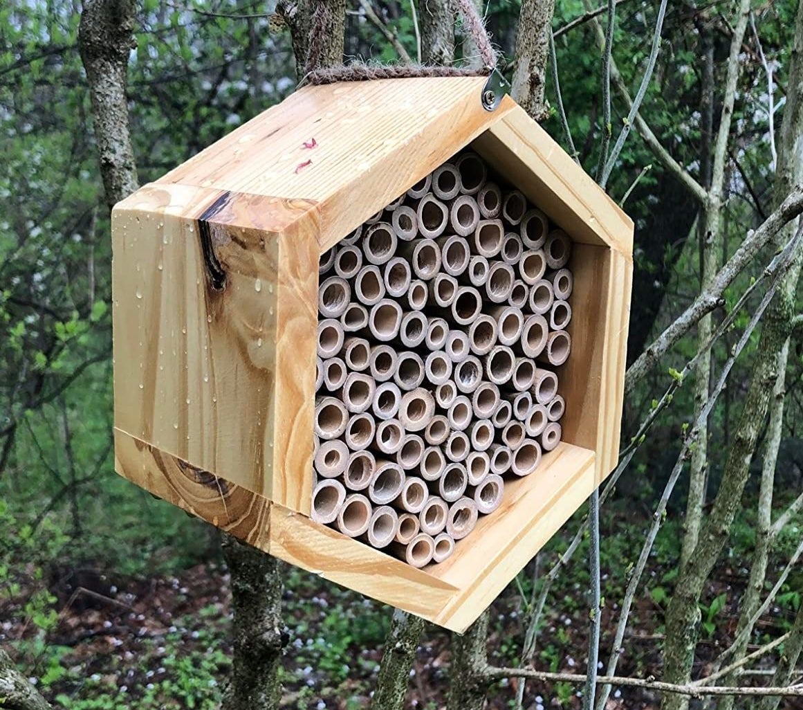 a reviewer photo of a wooden hexagon with many round crevices for bees hanging from a tree