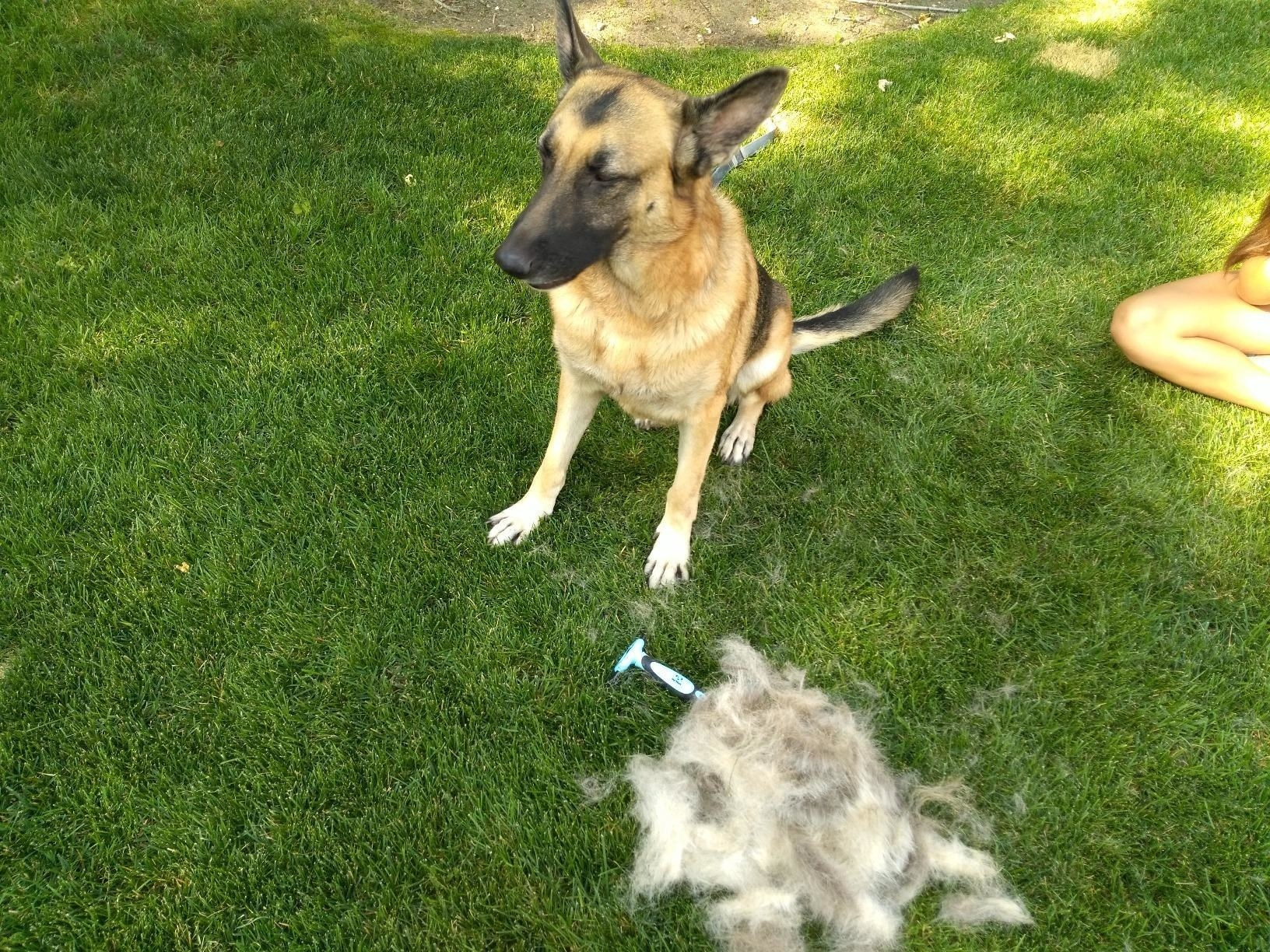 Review photo of dog after the pet de-shedding brush