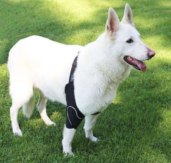 White fluffy dog wearing black elbow pad