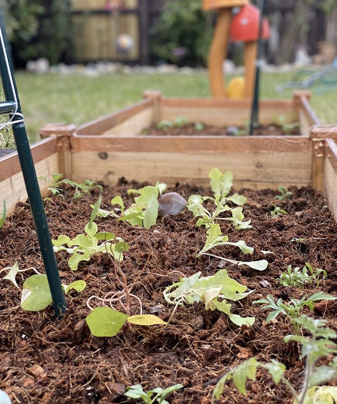 mulch spread over a garden bed