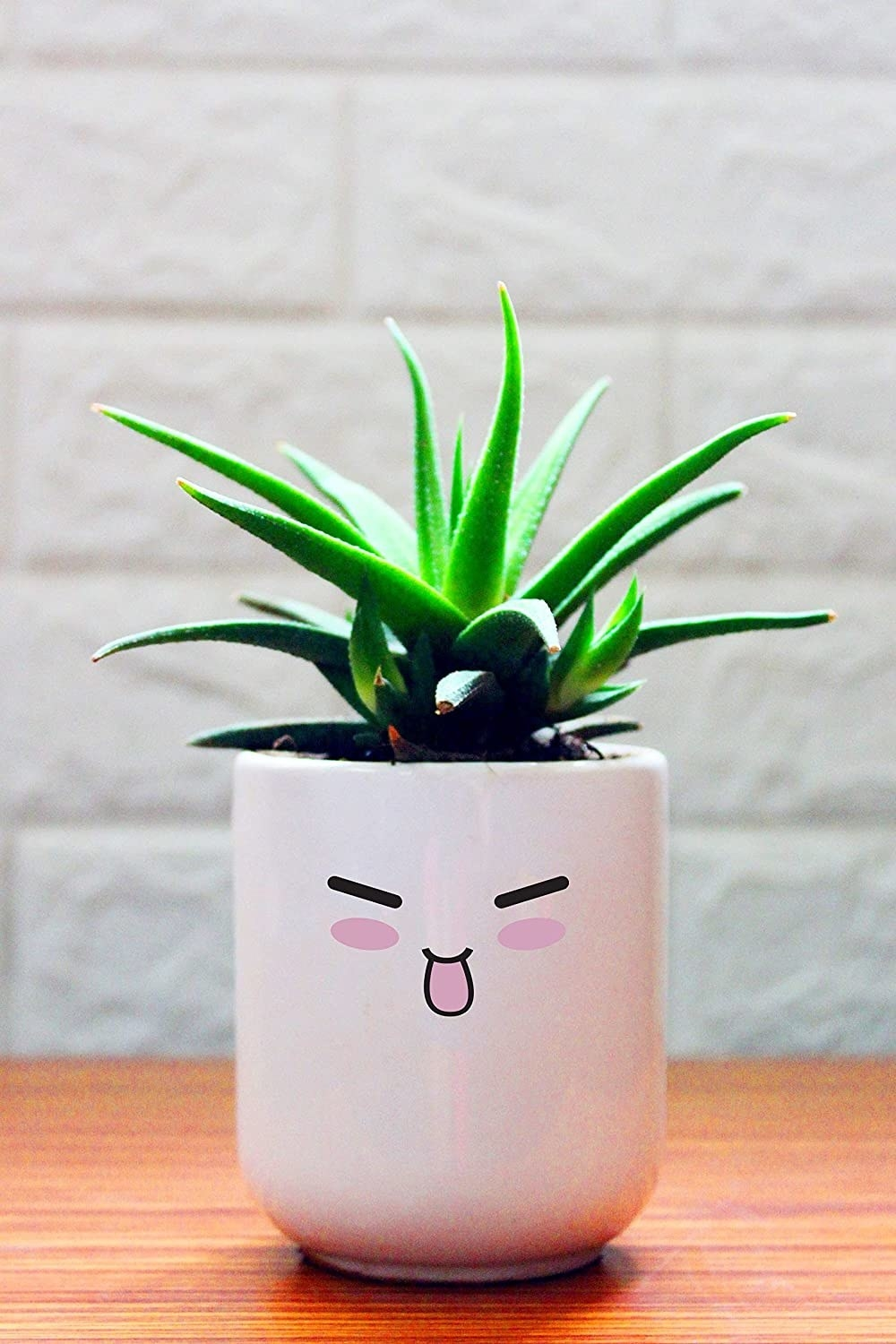 A Haworthia Fasciata in a white ceramic planter with an animated smiling face
