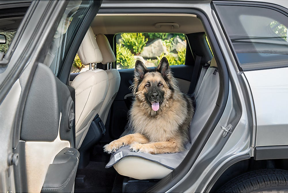 A fluffy brown dog on a grey seat cover