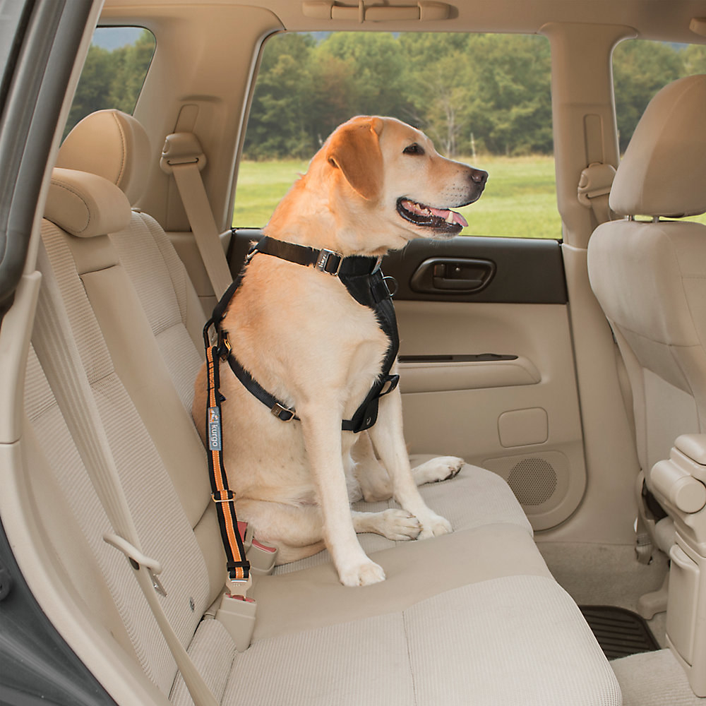 A dog in a car with orange and black seatbelt