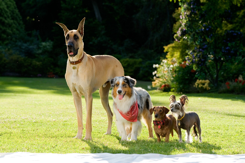 四只狗站在地里