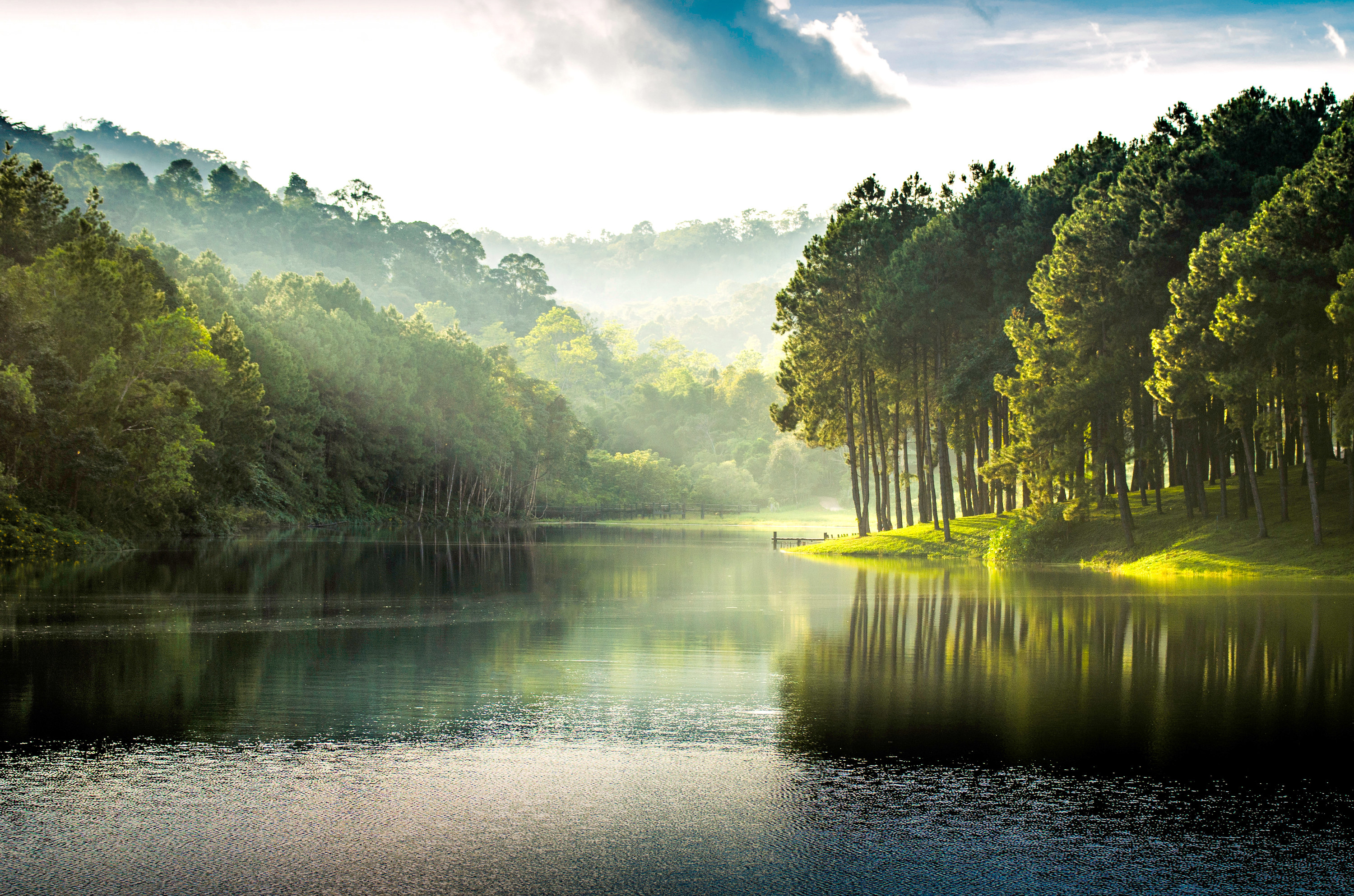 Beatiful nature lake and forest