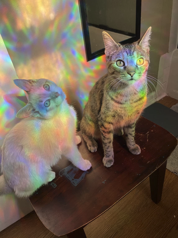 reviewer photo of their cats in a rainbow light cast from the film