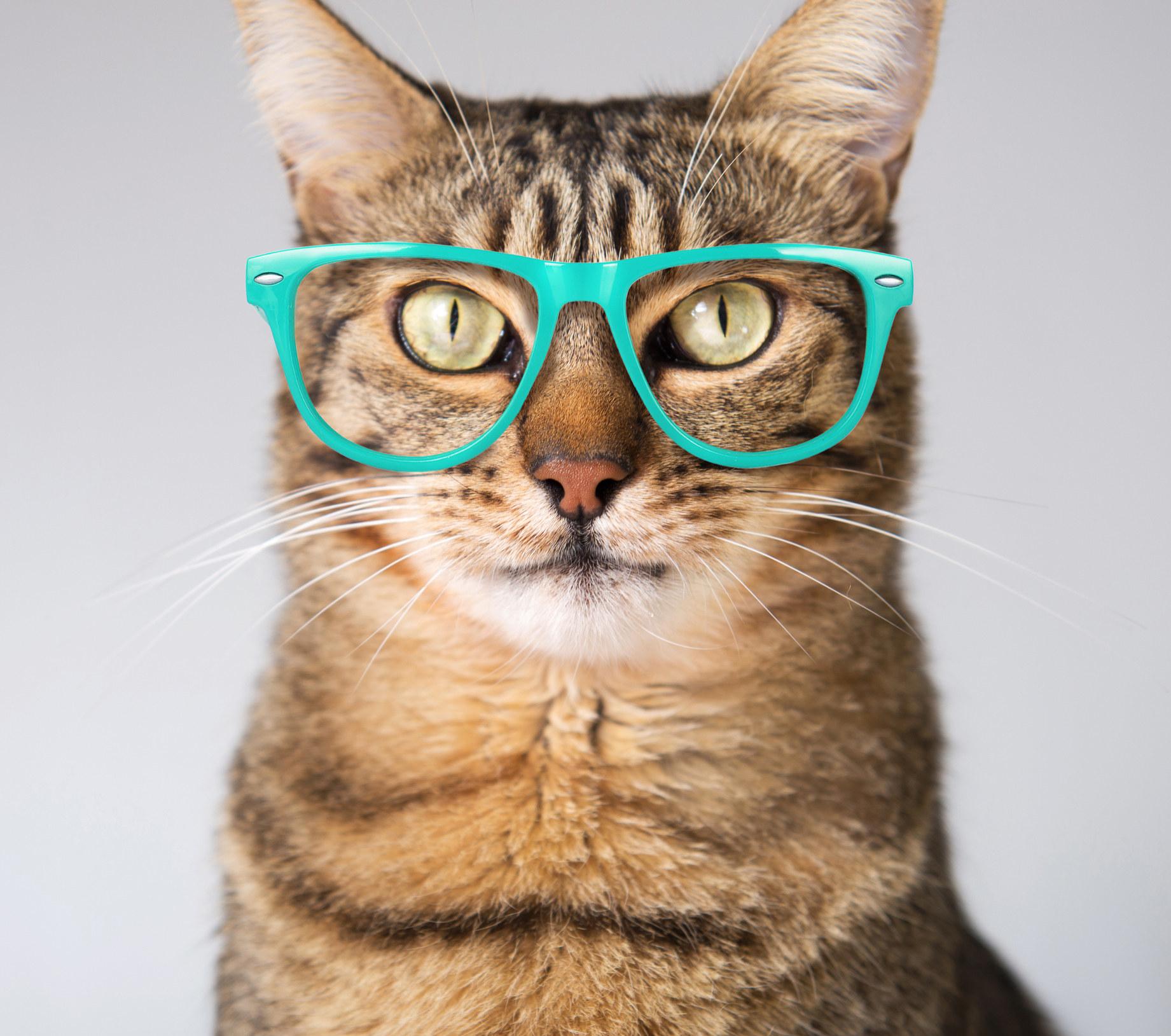 """戴眼镜的条纹猫""""class="""