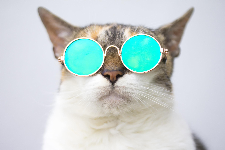 Photo of a cat wearing sunglasses