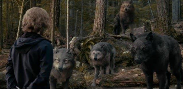 Jasper stands in front of a pack of wolves