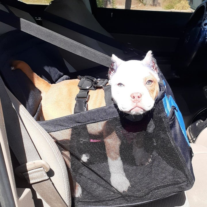 a reviewer photo of a small dog standing inside the dog booster seat