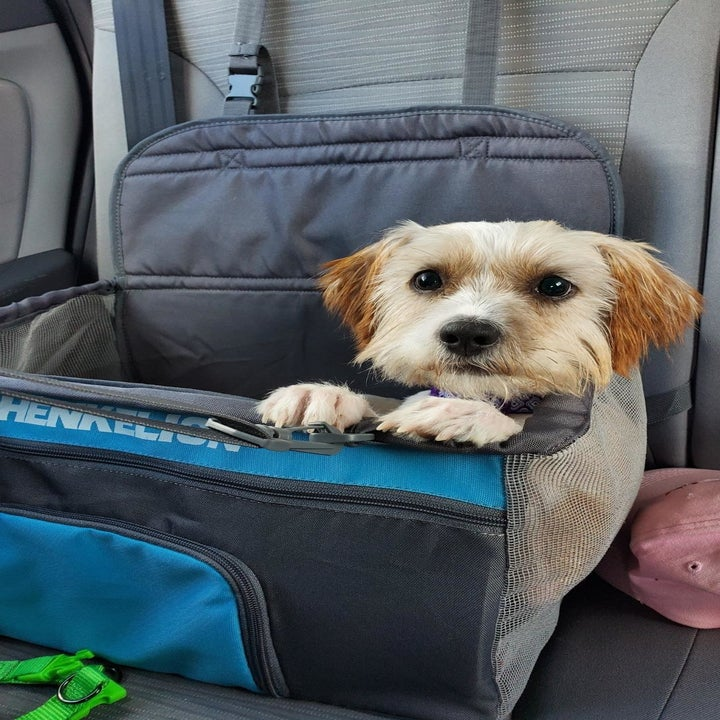 a reviewer photo of a dog sitting in the mesh booster seat