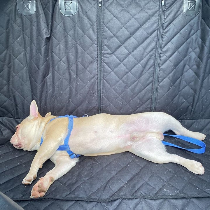 a reviewer photo of a dog laying on the backseat of a car with the quilted cover on it