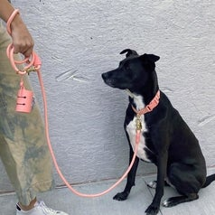 a model holding the leash that's clipped to a dog's collar