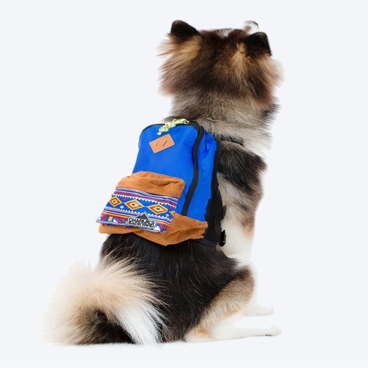 a dog wearing the backpack