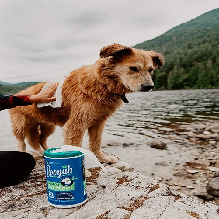 a model wiping down a wet dog with the wipes
