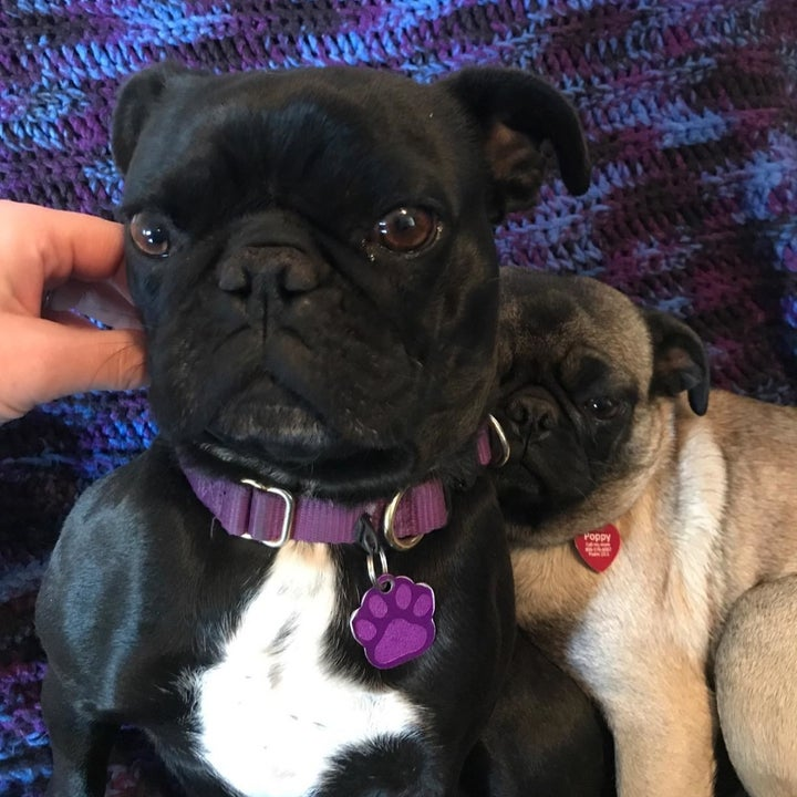 a reviewer photo of a dog wearing the collar in purple
