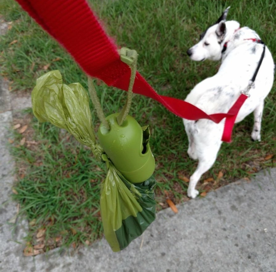 The reviewer's photo of the pack of dog poop bags attached to the leash