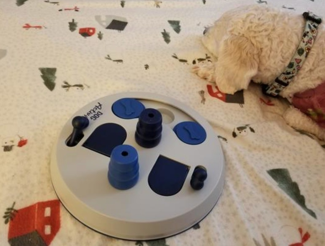 The reviewer's image of their dog with the interactive toy in beige with blue buttons