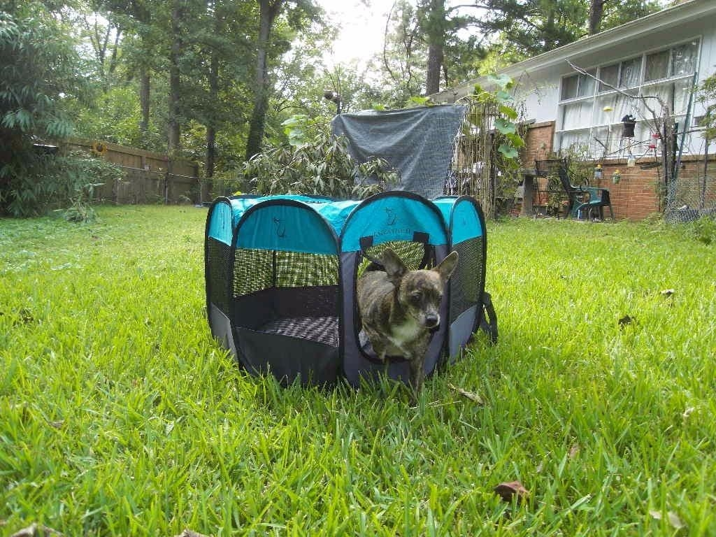 A dog exiting the zip-up dog door in the play pen