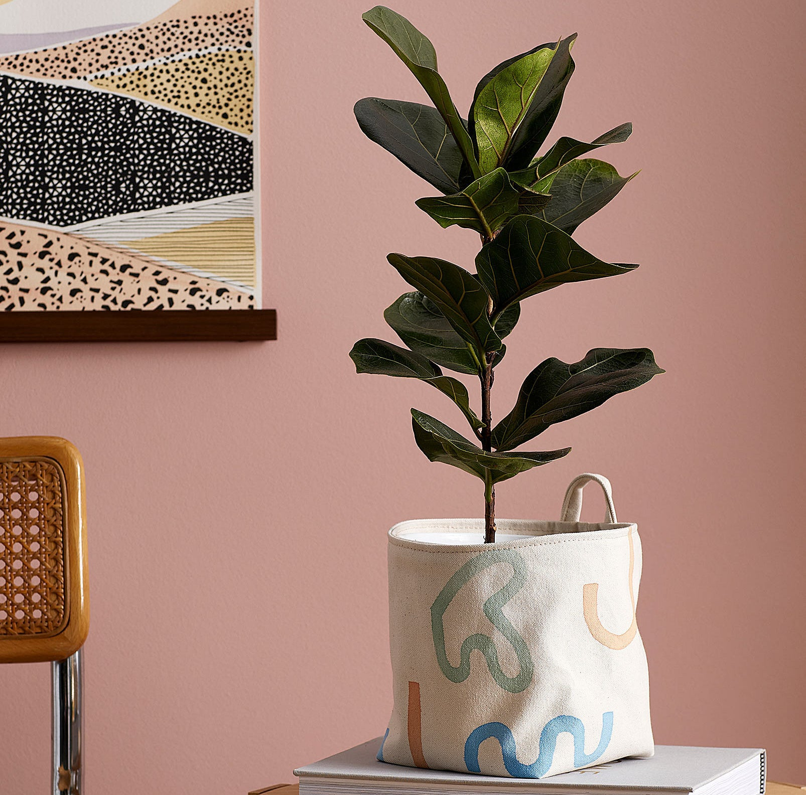 A large ficus plant in a fabric plant pot