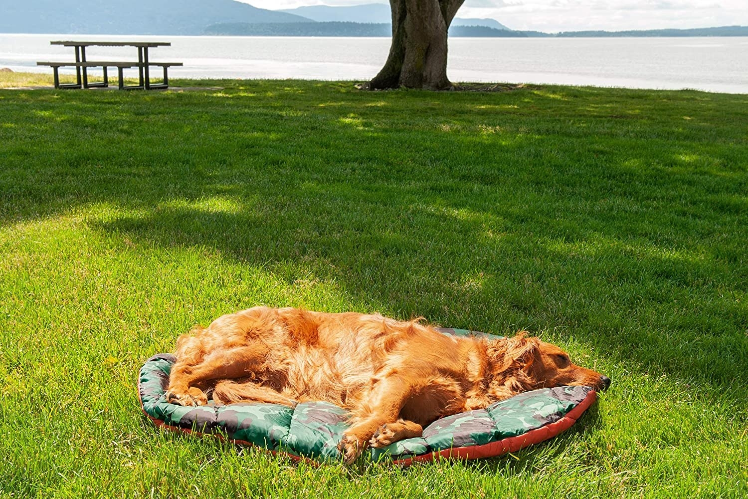 A dog on the bed, which is round and made of sleeping bag-like material