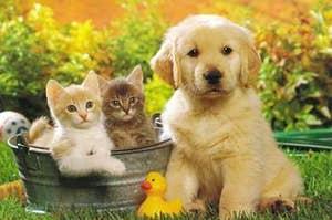 https://pennsaukenvillas.com/blog/top-7-best-house-pets/