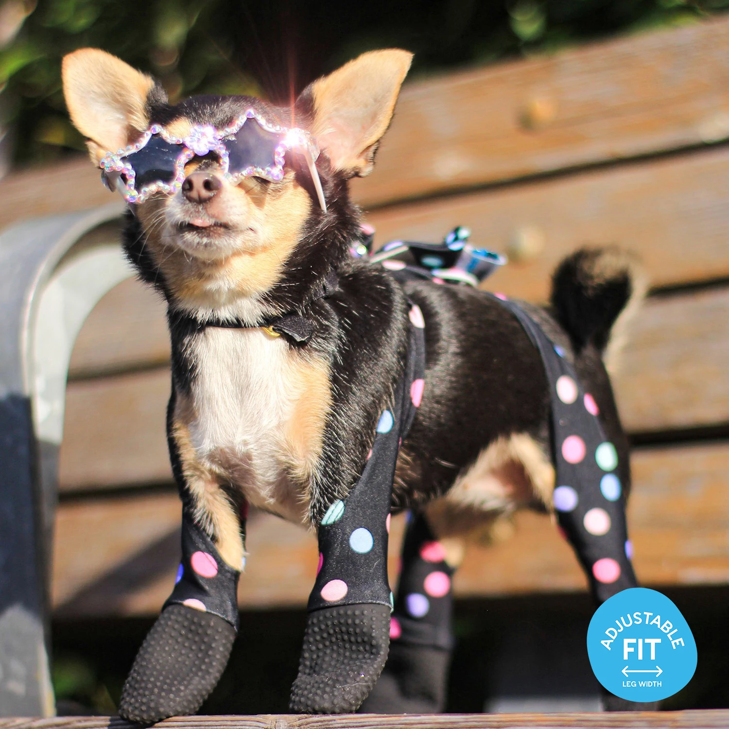 chihuahua with confetti leggings that cover legs and paws