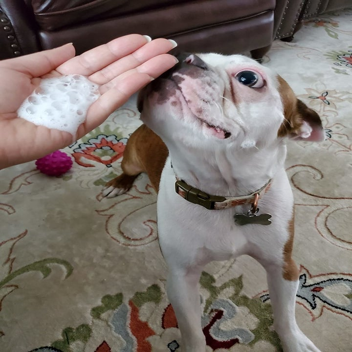 Reviewer's hand full of waterless shampoo foam next to dog