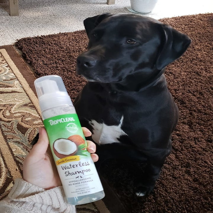 Reviewer holding bottle of waterless shampoo in front of dog