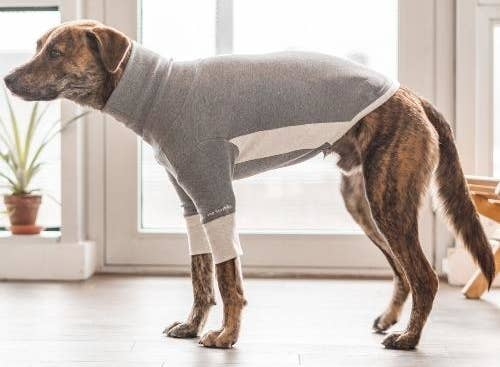 dog wearing the high-neck tee