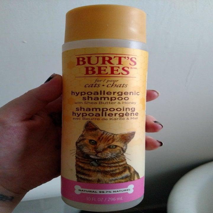 Bottle of Burt's Bees hypoallergenic shampoo for cats