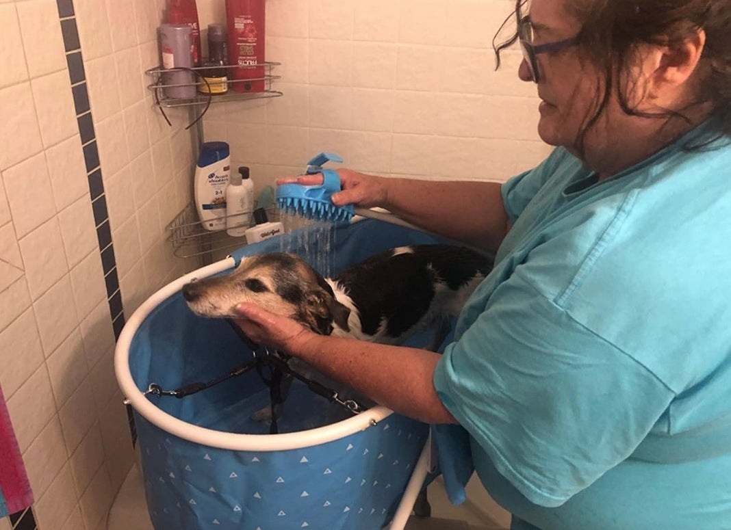Owner using Aquapaw on dog