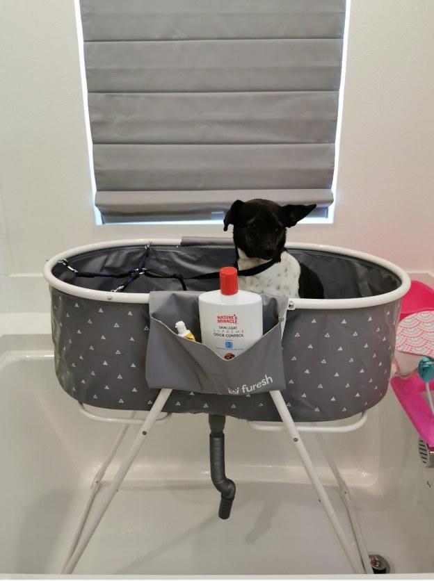 Dog in gray pet tub