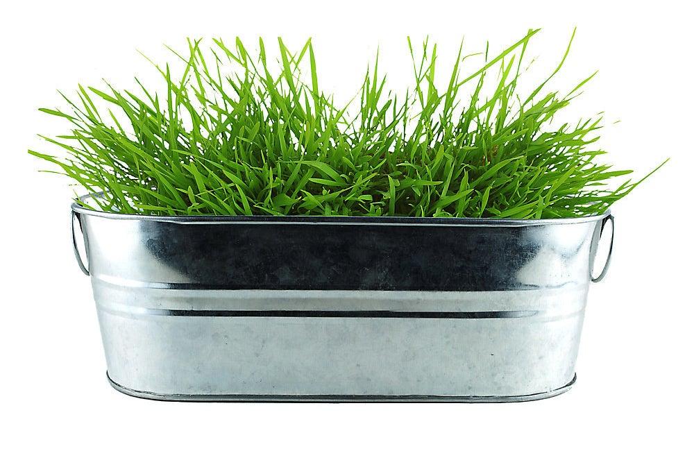 the tin of grass