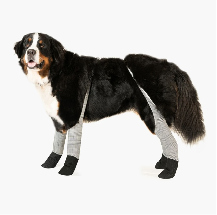 a dog wearing the leggings