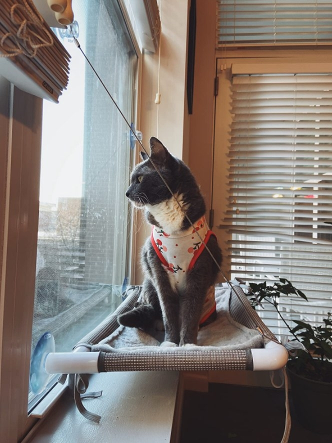 A reviewer showing her cat wearing a sweater sitting in the window perch