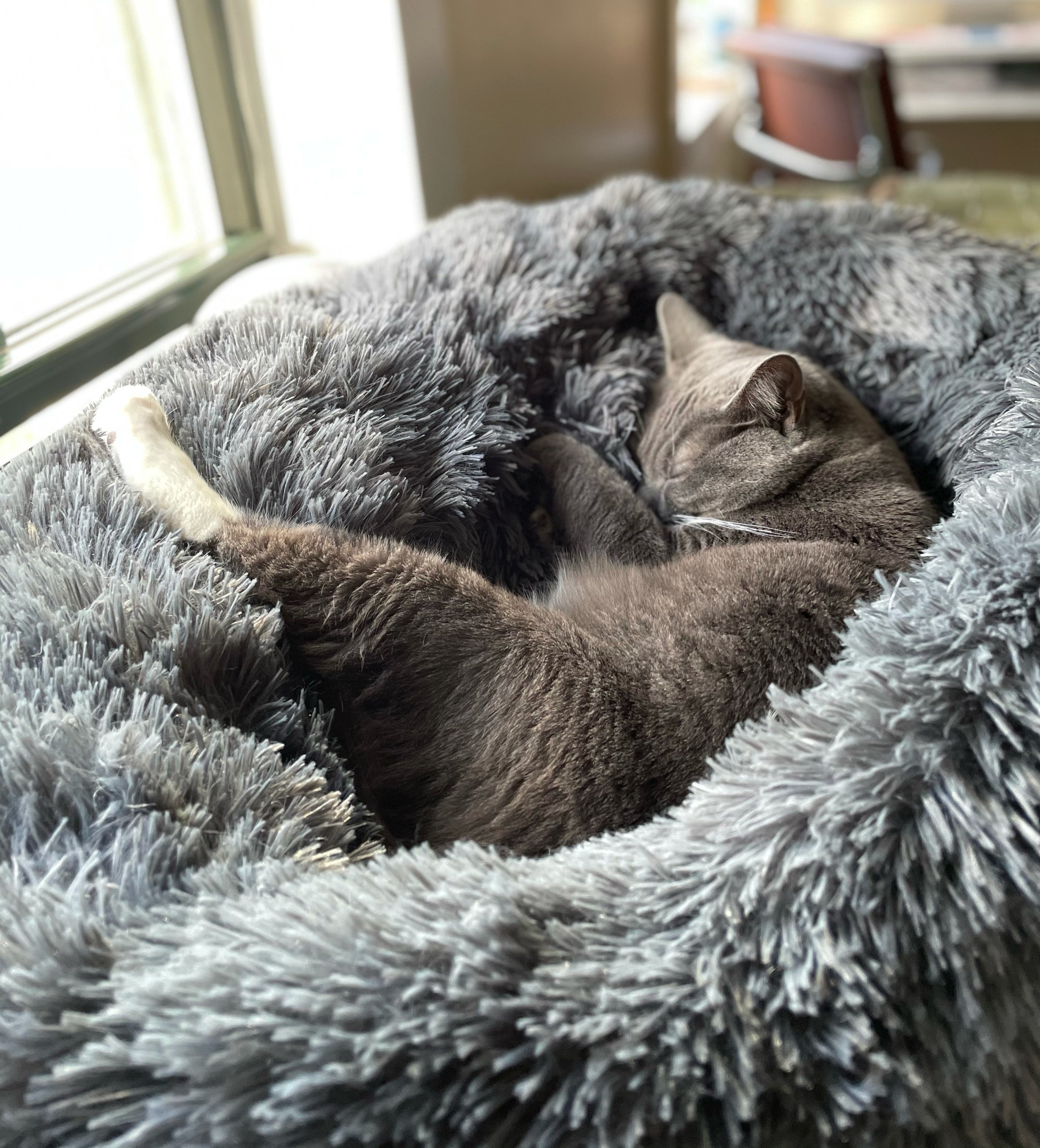 a buzzfeed editor's gray cat sleeping inside of the gray anti-anxiety bed