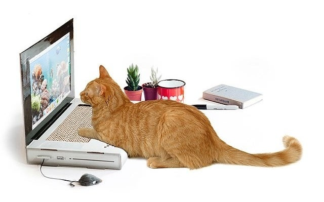 a cat staring at the fake laptop screen