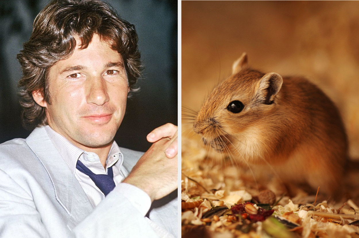 Richard Gere posing at a press event in the late '80s; a gerbil eating nuts in a naturesque portrait