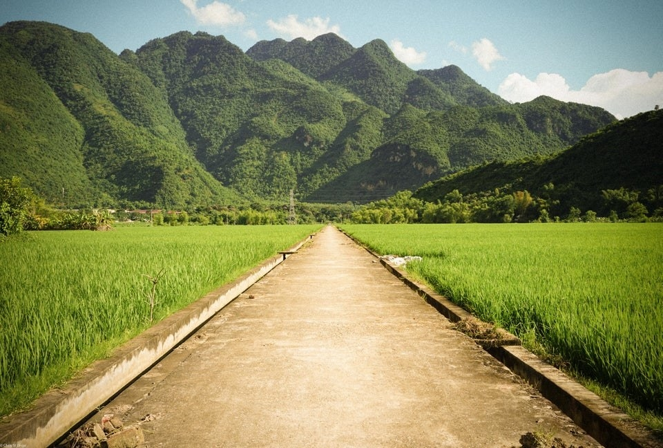 The rice fields in Mai Châu Village, Vietnam