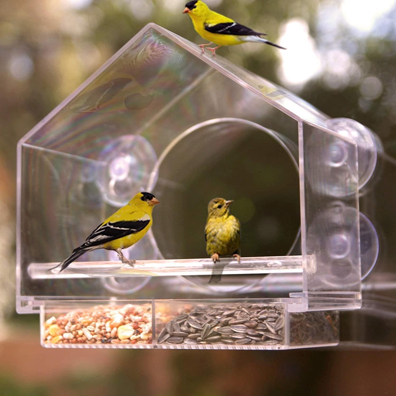 birds in and around the bird feeder