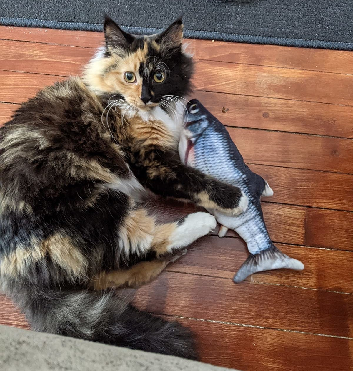 a reviewer's cat playing with the fish