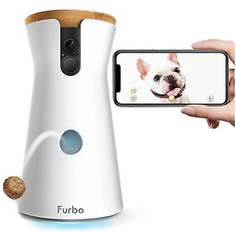The dog camera
