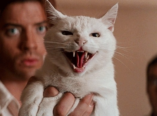 Rick holds up a cat which is hissing