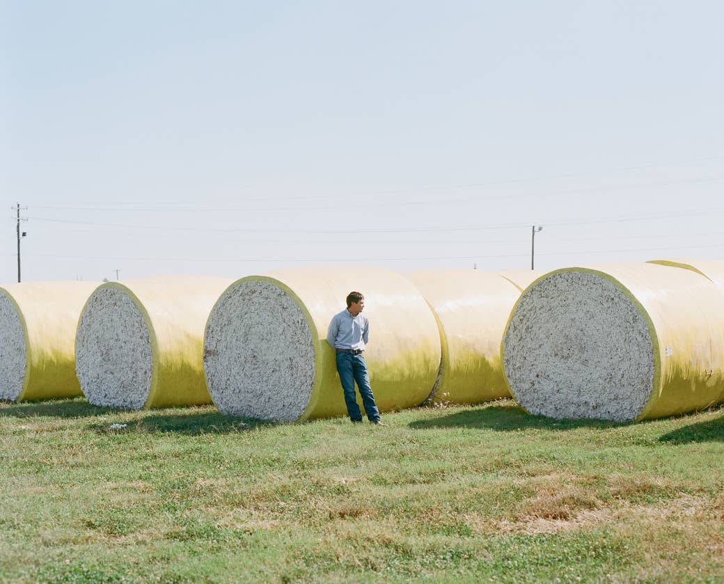 A man stands next to bales of cotton in a field