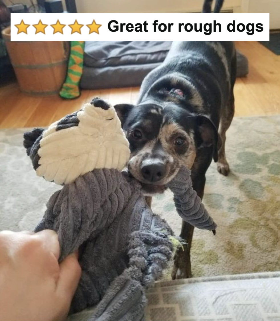 """Reviewer's dog pulling on the toy with five-star caption """"great for rough dogs"""""""